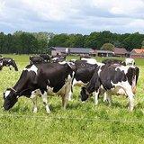 Open Boerderijdag bij De Neeth in Barlo.